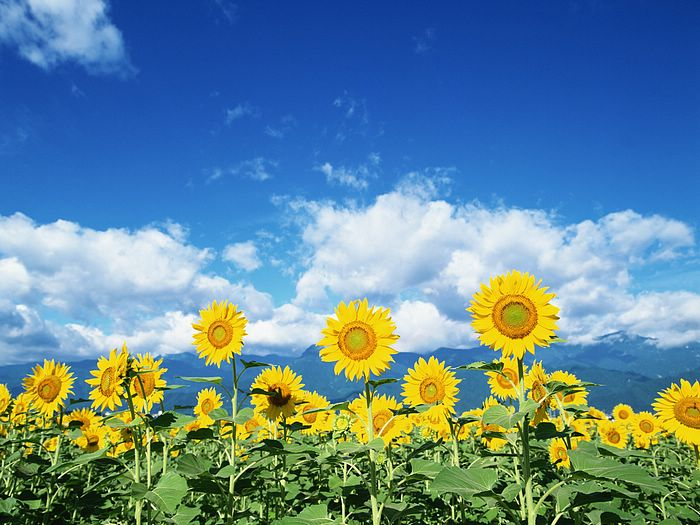 You My Are Sunshine Wallpaper When Skies You Make Me Are Sunshine Only Gray My Happy